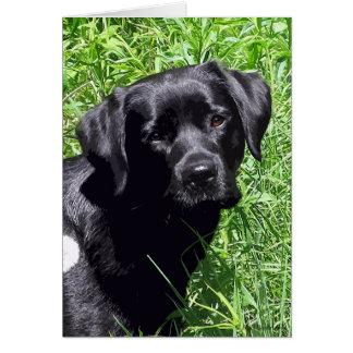 Cartão Labrador preto - dia de primavera