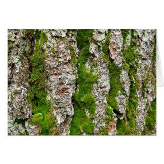 Cartão Latido de pinheiro com musgo
