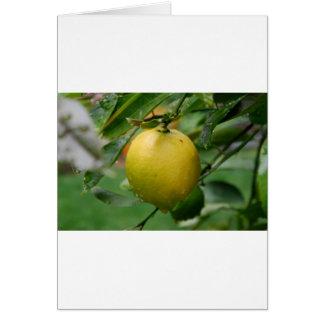 Cartão Limão de suspensão