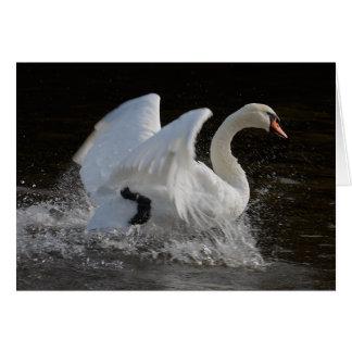 Cartão Limpe a cisne