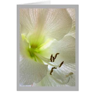 Cartão Lírio branco do detalhe da flor 37