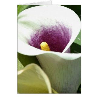 Cartão Lírio de Calla branco