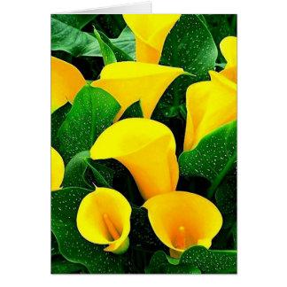 Cartão Lírios de Calla amarelos