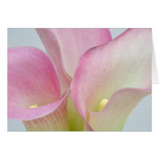 Cartão Lírios de Calla cor-de-rosa