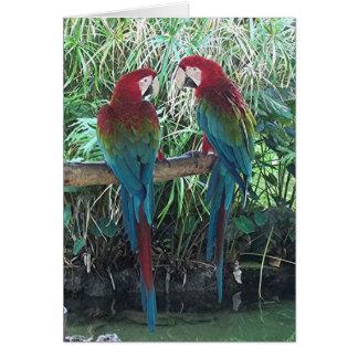 Cartão Macaws