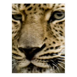 Cartão manchado do leopardo