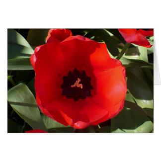 Cartão Mandala da tulipa do cumprimento-um da amizade