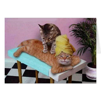 Cartão Massagem engraçada do gato