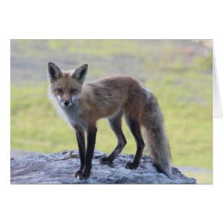 Cartão Momma Foxy