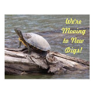 Cartão movente da tartaruga enlameada cartão postal