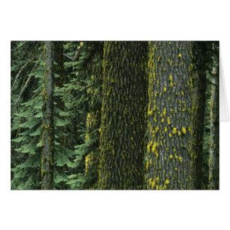 Cartão Mt. Ashland, floresta nacional do rio desonesto,