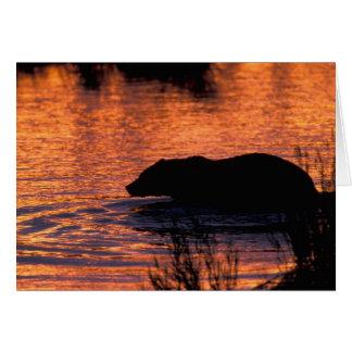 Cartão NA, EUA, Alaska, urso de urso