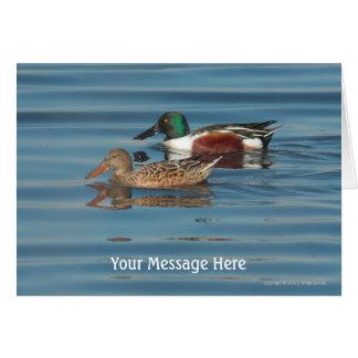 Cartão nadador dos patos-colhereiros do norte