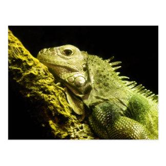 Cartão nobre da iguana