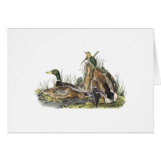 Cartão Notecard com o ninho do pato do pato selvagem