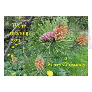 Cartão Notecard: Pinheiro & cones, montanhas da dolomite