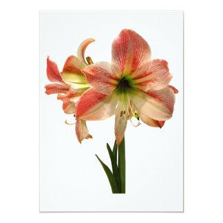 Cartão O Amaryllis Apple floresce