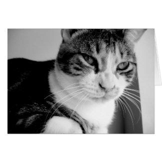 Cartão O gato