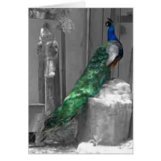 Cartão O pavão