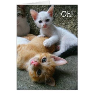 Cartão Oh! Two sweet Kitties limpa a happy Birthday!