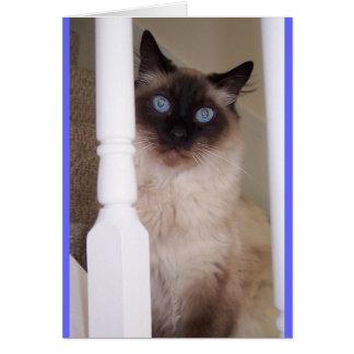 Cartão Olhos azuis