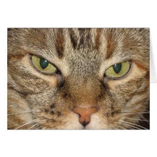 Cartão Olhos de gato