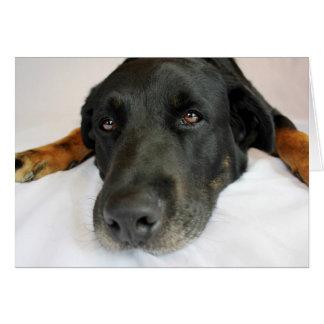 Cartão Olhos do cão