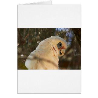 Cartão Olhos do pássaro