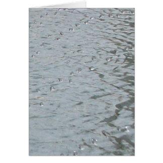Cartão Ondinhas da água