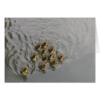 Cartão Onze patos do bebê no rio Kennet
