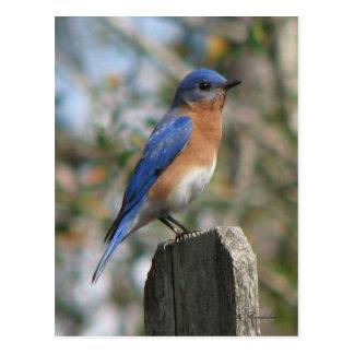 Cartão oriental do homem do Bluebird
