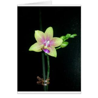 Cartão Orquídea do Phalaenopsis (vazio para dentro)