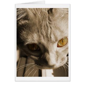 Cartão Os olhos de gato
