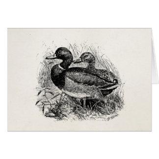 Cartão Os patos selvagens do pato selvagem do vintage