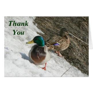 Cartão os patos selvagens masculinos e fêmeas na neve