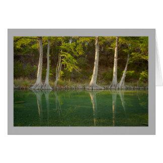 Cartão Paisagem 21 Green River com árvores de cipreste