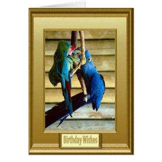 Cartão Papagaios exóticos quadro