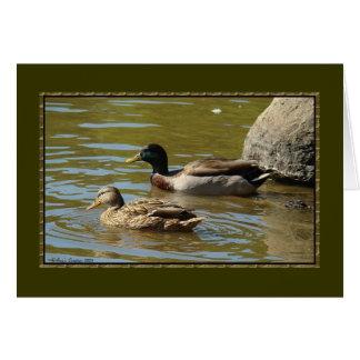 Cartão Pares do pato do pato selvagem