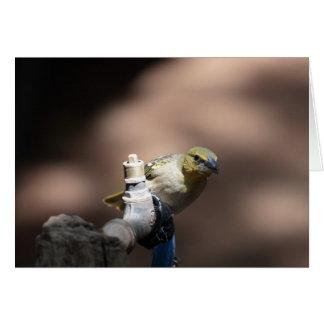 Cartão Pássaro do tecelão em uma torneira