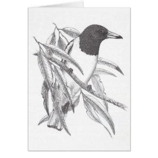 Cartão Pássaro Pied do carniceiro - nigrogularis do