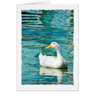 Cartão Pato branco de Pekin - foto da natureza nas