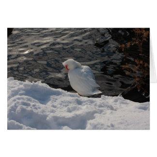 Cartão pato de Muscovy branco na neve