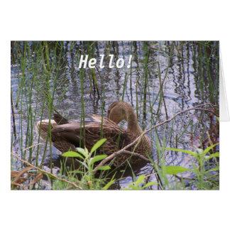 Cartão Pato na água