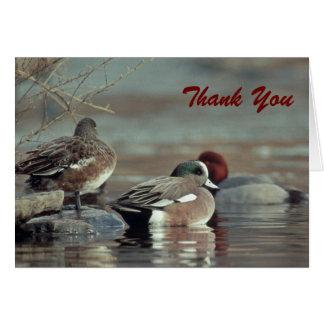 Cartão pato selvagem do wigeon americano, obrigado notar