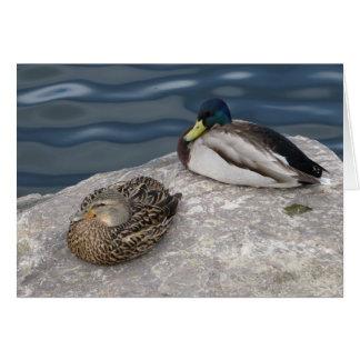 Cartão Patos selvagens de descanso