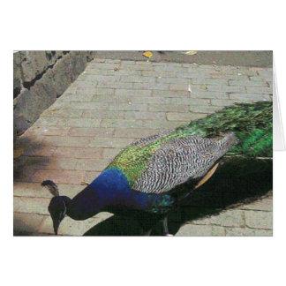 Cartão Pavão