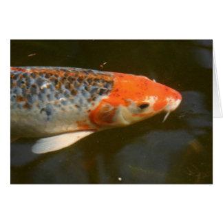 Cartão Peixes de Koi