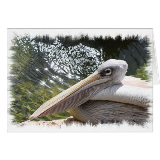 Cartão Pelicano