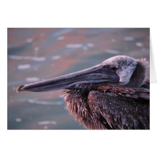 Cartão Pelicano com um olho em você!