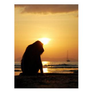 CARTÃO pensativo do macaco